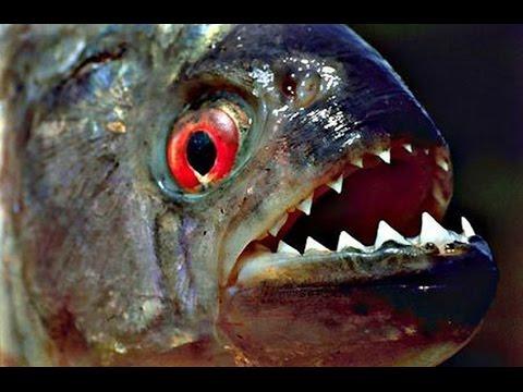 Зубы в природе и новые технологии